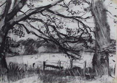 Trees at Dumfries House 1, charcoal, 42 x 60cm
