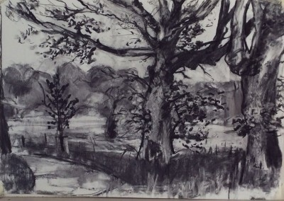 Trees at Dumfries House 2, charcoal, 42 x 60cm